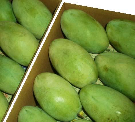 Dashehari Mango