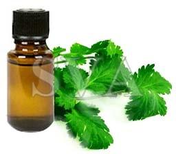 Coriander oil