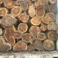 Ghana Teak Wood - 02