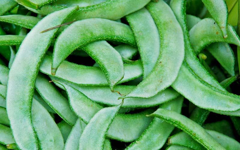 Fresh Sem Beans
