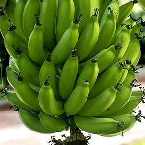 Fresh Green Banana 04