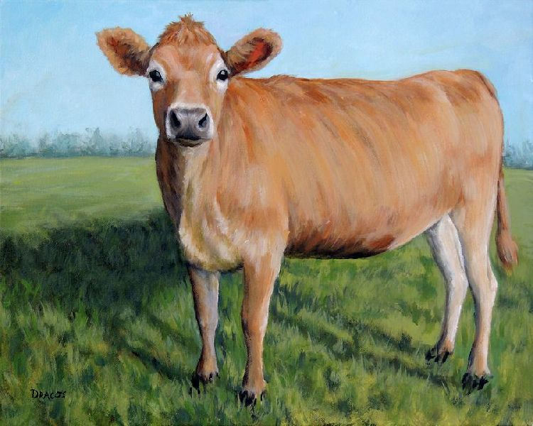 Jersey Cow 01