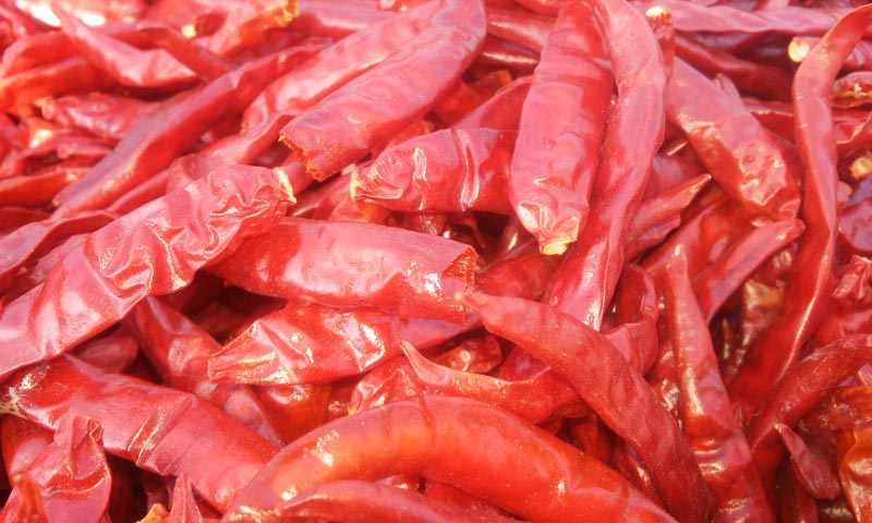 Dried Red Chilli Teja S17 Without Stem Exporters