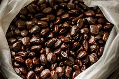 Tamarind Seeds 02