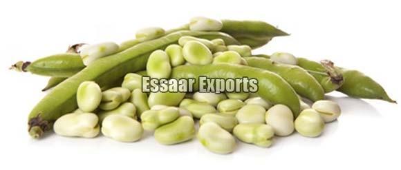 Fresh Broad Beans