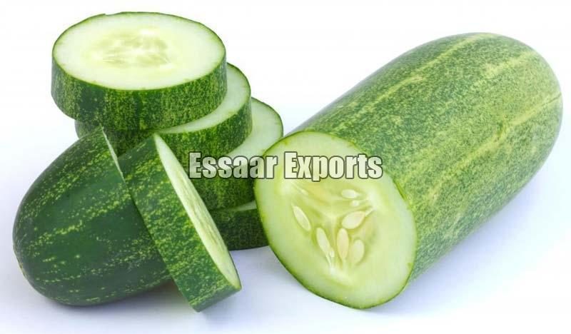Fresh Cucumbers