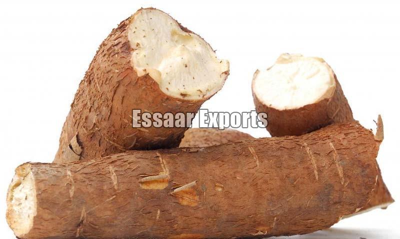 Fresh Tapioca Root