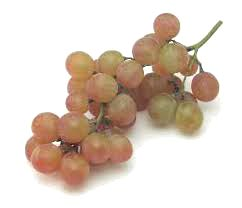 Fresh Grapes 03