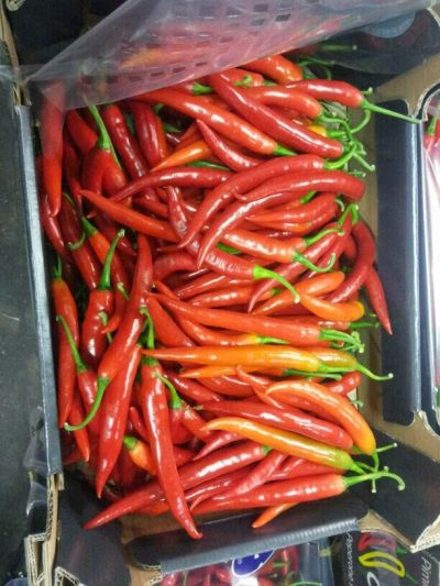 Fresh Red Chili 03