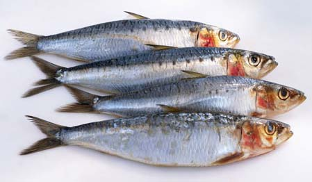 how to cook fresh sardines fish