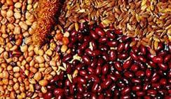 Fertilizer Seeds