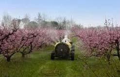Organic Fertilizer Spray