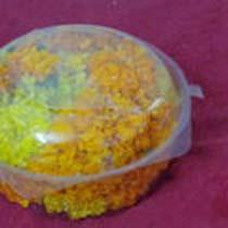 Marigold Flowers 03