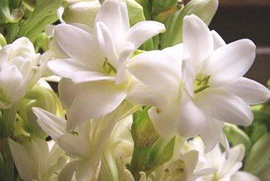 Marigold Flowers 05