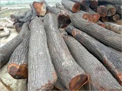 Babool Wood Logs