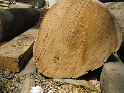 Valsadi Teak Wood Logs