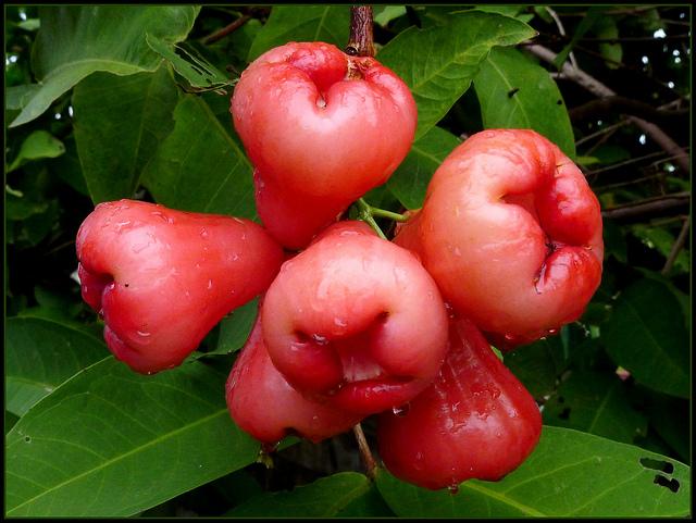 Fresh Rose Apple