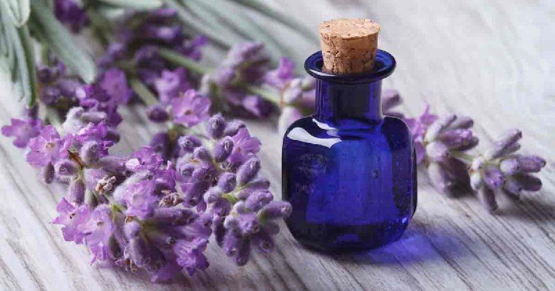 Mystic Lavender Aroma Oil