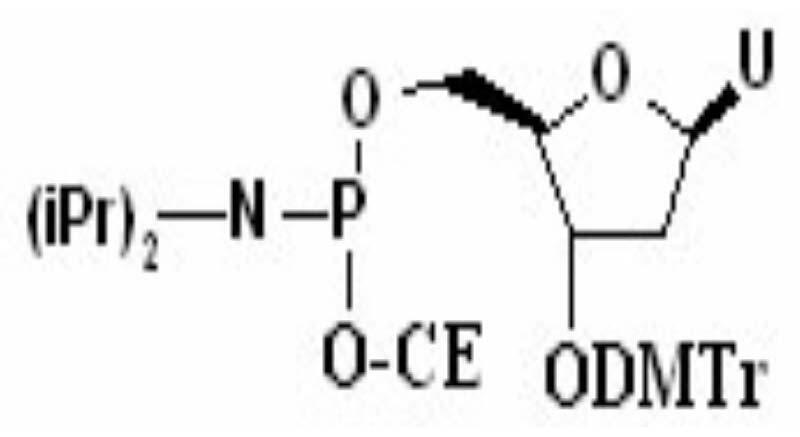 3'-O-(4, 4'-dimethoxy trityl)-1'-2'-dideoxy D Ribose-5'-[(2-cyanoethyl)-(N, N-diisopropyl)]-phosphoramide