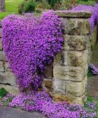 Ground Cover Plant 01