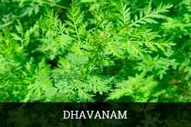 Fresh Davanam Leaves