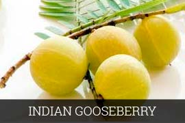 Fresh Indian Gooseberry