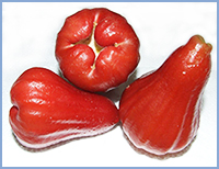 Fresh Rose Apple