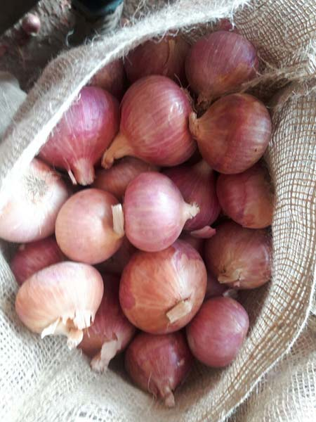 Fresh Red Onion 04