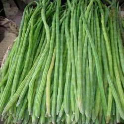 Fresh Moringa Drumsticks