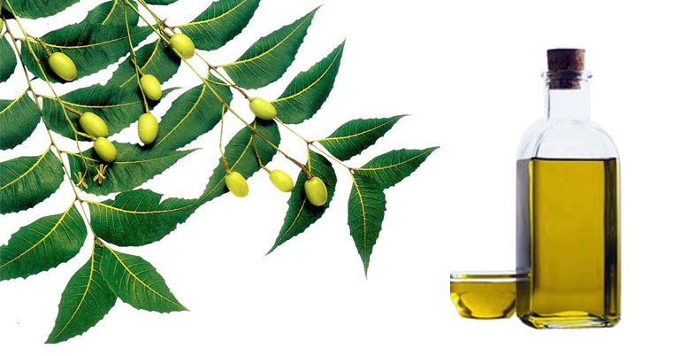Neem Oil Supplier,Wholesale Neem Oil Manufacturer in Khargone India