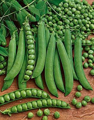Green Peas Seed 06