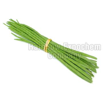 Moringa Drumsticks