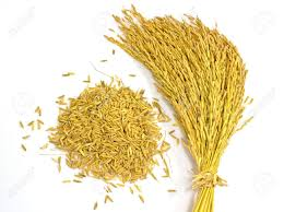 Organic Paddy