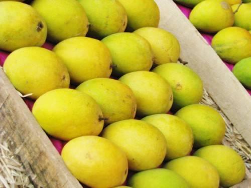 Fresh Dusehri Mango