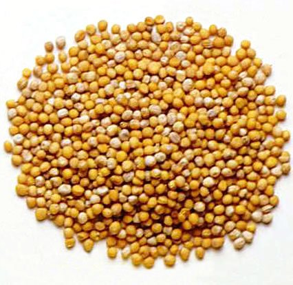 Taramira Seeds