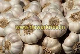 Fresh Garlic 01