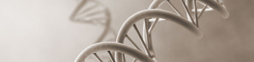 Modifying and Restriction Enzymes