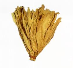 Flue Cured Virginia Tobacco