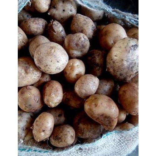 Fresh Potato 04