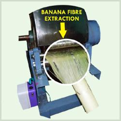 Banana Fibre Extraction Machine