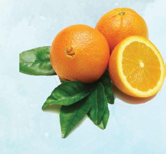 Navel Orange 01