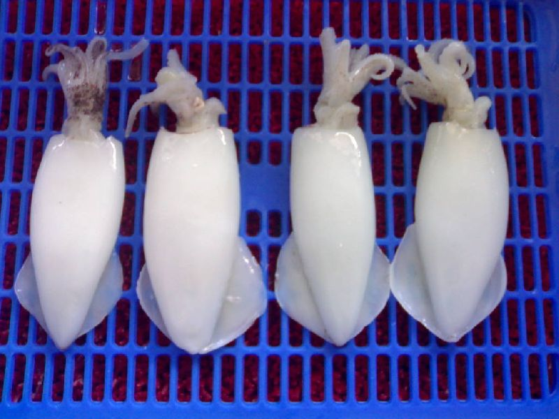 Frozen Whole Cleaned Squid