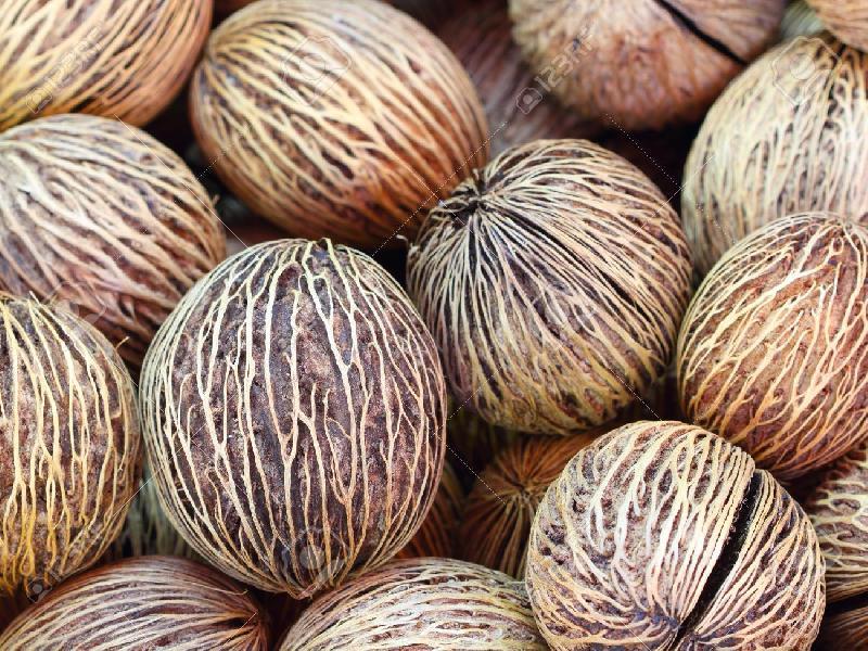Alstonia Seeds