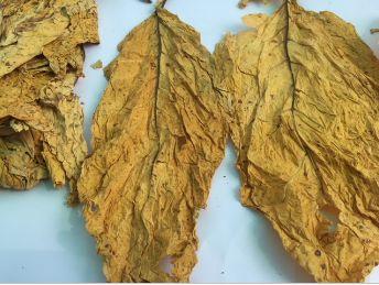 Flue Cured Virginia Tobacco 04