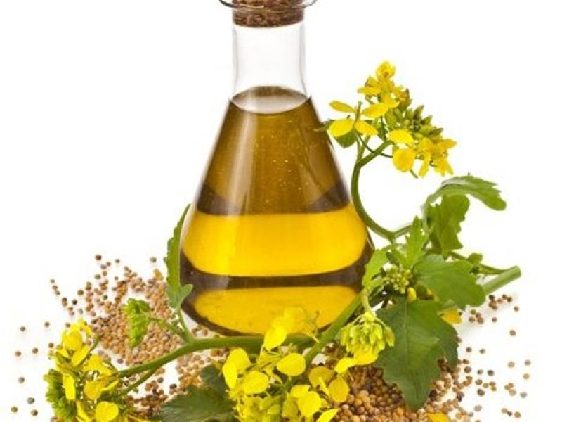 Wholesaler of Canola Oil - Canola Oil Supplier | Canola Oil