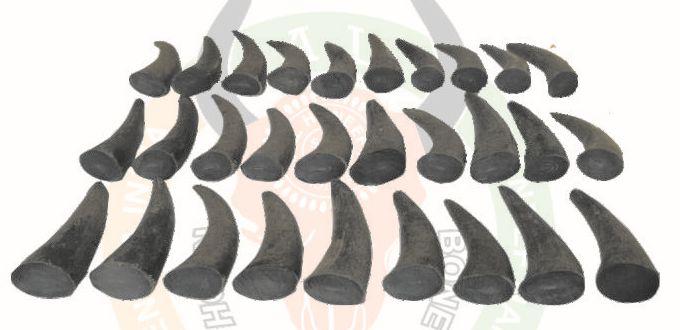 Buffalo Horn Tips & Hollow 02