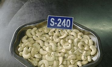 S-240 Whole Cashew Nuts
