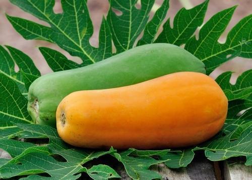 Fresh Papaya Supplier in India