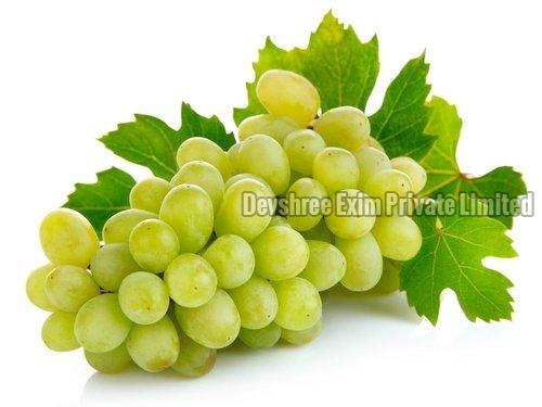 Green Grapes Manufacturer in India