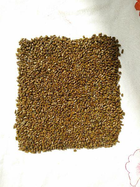Cassia Tora Seeds 03
